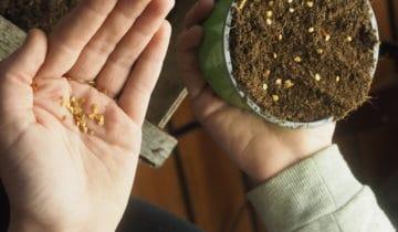 Pěstujte přímo ze semínek! Cokoli ajednoduše.