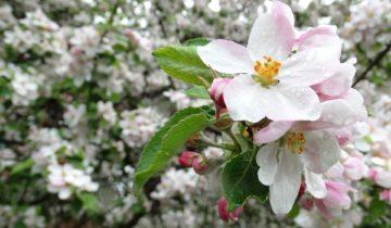 Co dělat na zahradě v květnu?