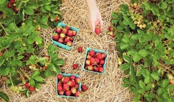 Sladký červen – měsíc jahod atřešní