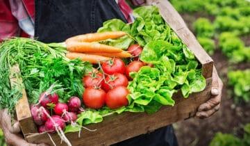 Vsaďte na postupný výsev! Aneb čerstvá zelenina pocelý rok.