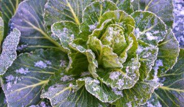 Zahrada vprosinci alednu:Jak na čerstvé vitamíny dokonce ivzimě