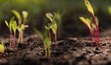 Zahrada vúnoru:Zima se loučí, jaro bere za kliku