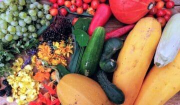 Jak na větší úrodu asladší plody? Jednoduše!